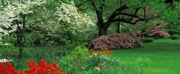 Vitamin Deposu Bahçelere Vitamin Takviyesi