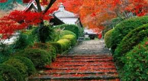 Doğanın Mükemmel Yansıması:Bahçeler