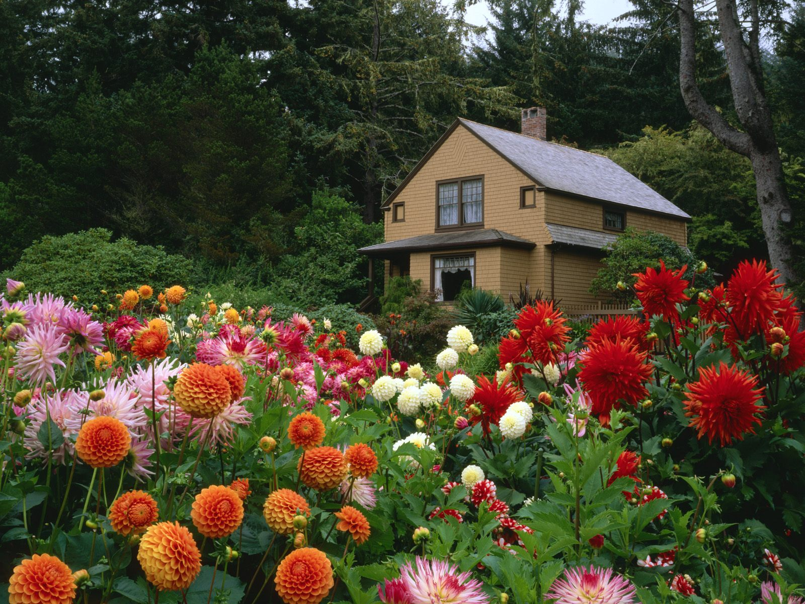 garden-house-and-dahlias-shore-acres-state-park-oregon